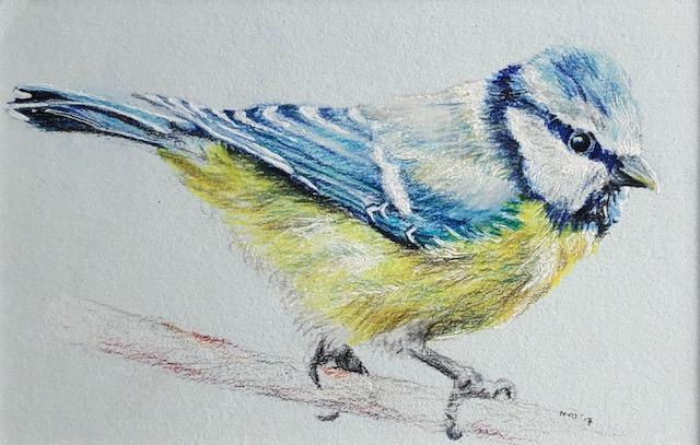 Tekening vogel - nivanovart.nl